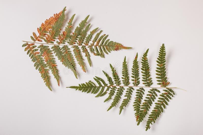 Изолированные ветви папоротника стоковые изображения