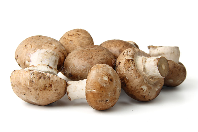 изолированные грибы стоковые изображения rf