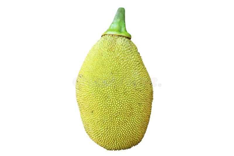 изолированные детеныши jackfruit стоковая фотография