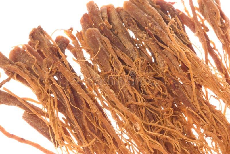 изолированные женьшенью корейские корни макроса стоковое изображение