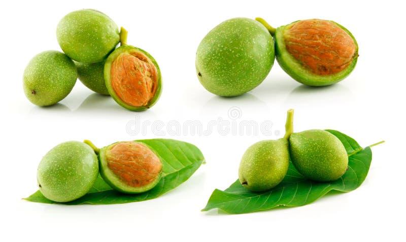 изолированные зеленым цветом зрелые грецкие орехи комплекта белые стоковое фото