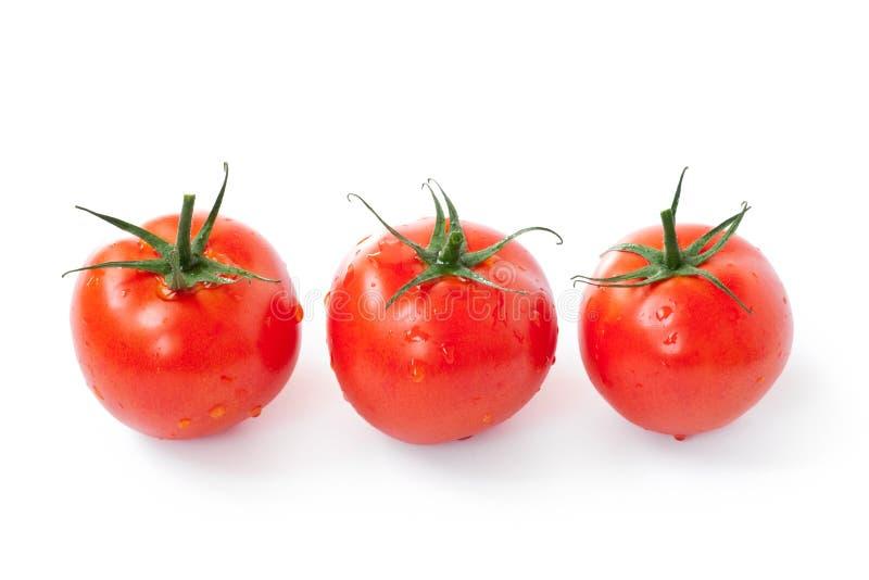 изолированные красные томаты стоковая фотография rf