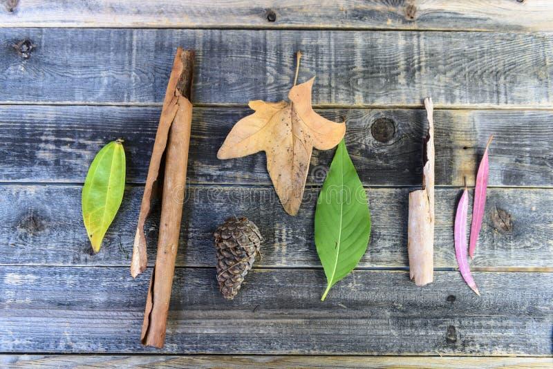 Изолированные листья и кора аранжировали на деревянной предпосылке стоковое фото