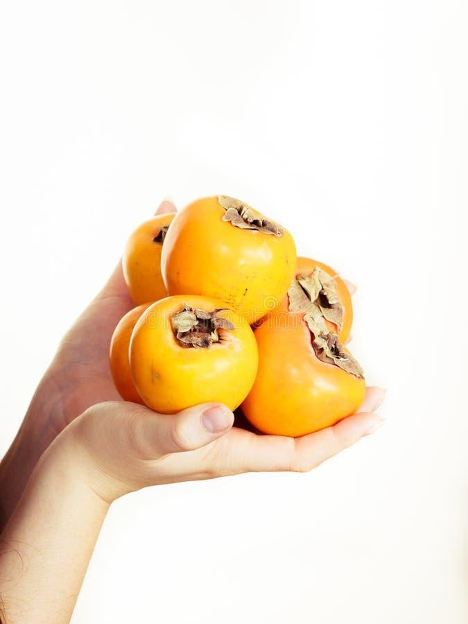 Изолированные плоды kaki хурмы удерживания руки, стоковая фотография