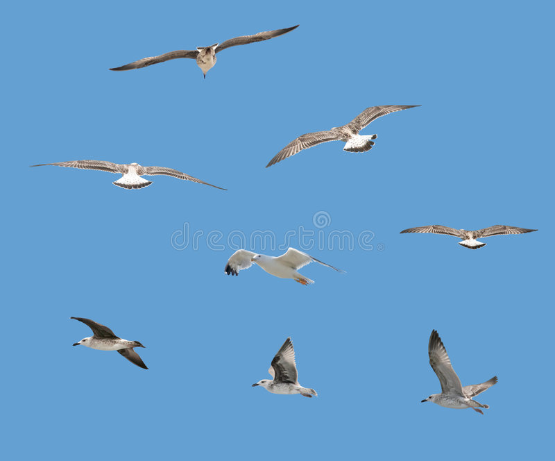 изолированные птицы стоковое изображение