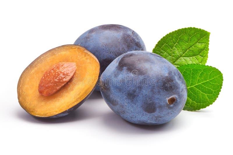 Изолированные сливы Полтора голубого плодоовощ сливы при листья изолированные на белой предпосылке стоковые фото