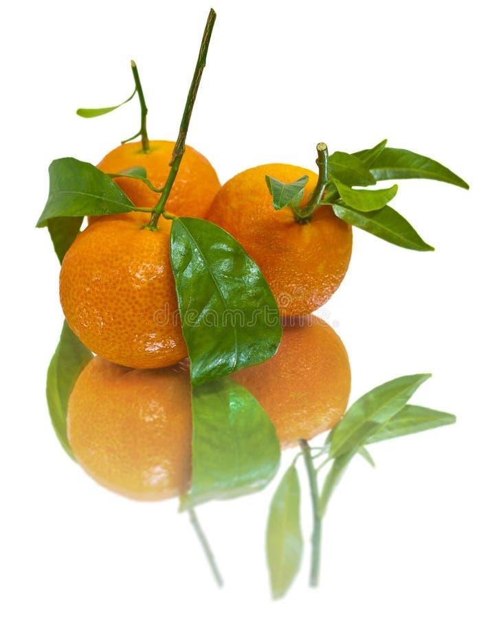 изолированные сочные tangerines стоковая фотография