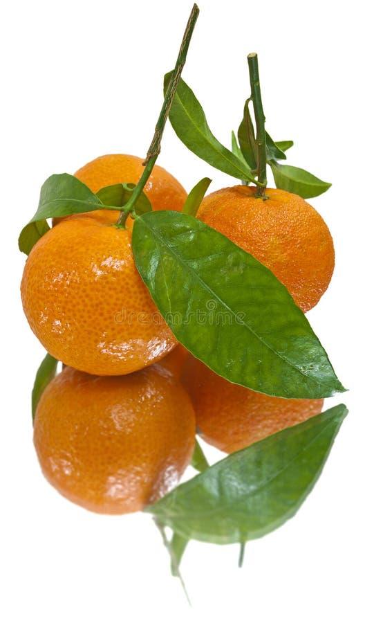 изолированные сочные tangerines стоковые изображения rf