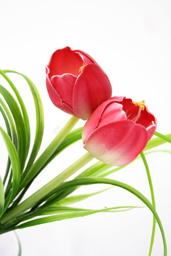 изолированные цветки стоковая фотография