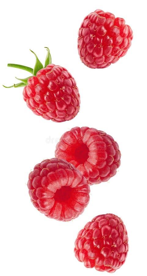 Изолированные ягоды летая Падая плоды поленики изолированные на белой предпосылке с путем клиппирования стоковое фото rf