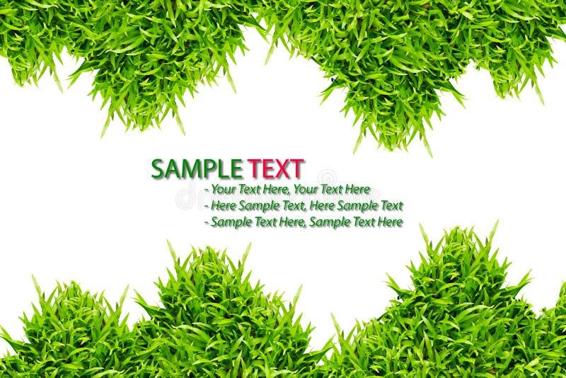 изолированный зеленый цвет травы рамки стоковые фото