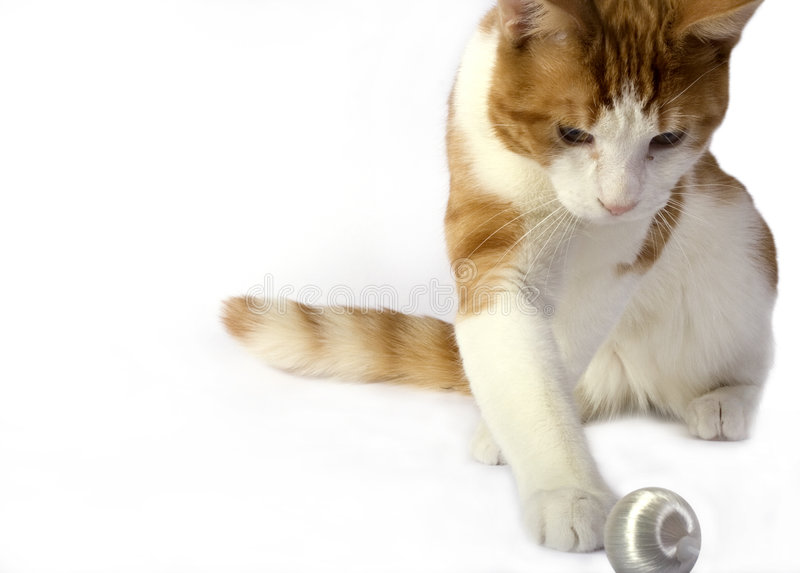 изолированный кот стоковые изображения