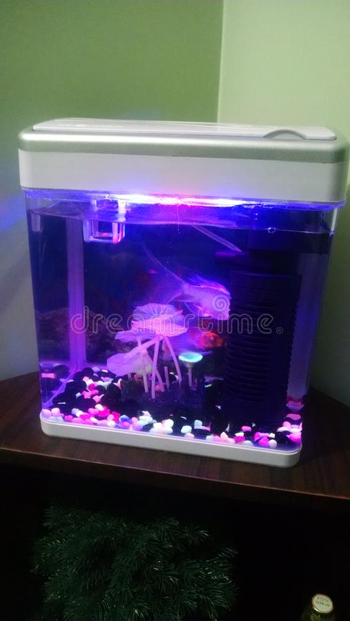 изолированный, рыбы, мини аквариум стоковые изображения