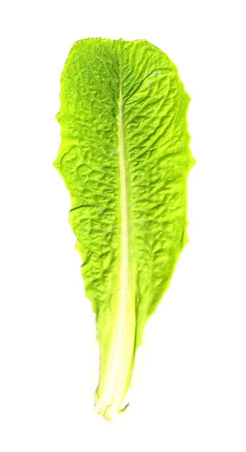 изолированный салат листьев стоковые фотографии rf