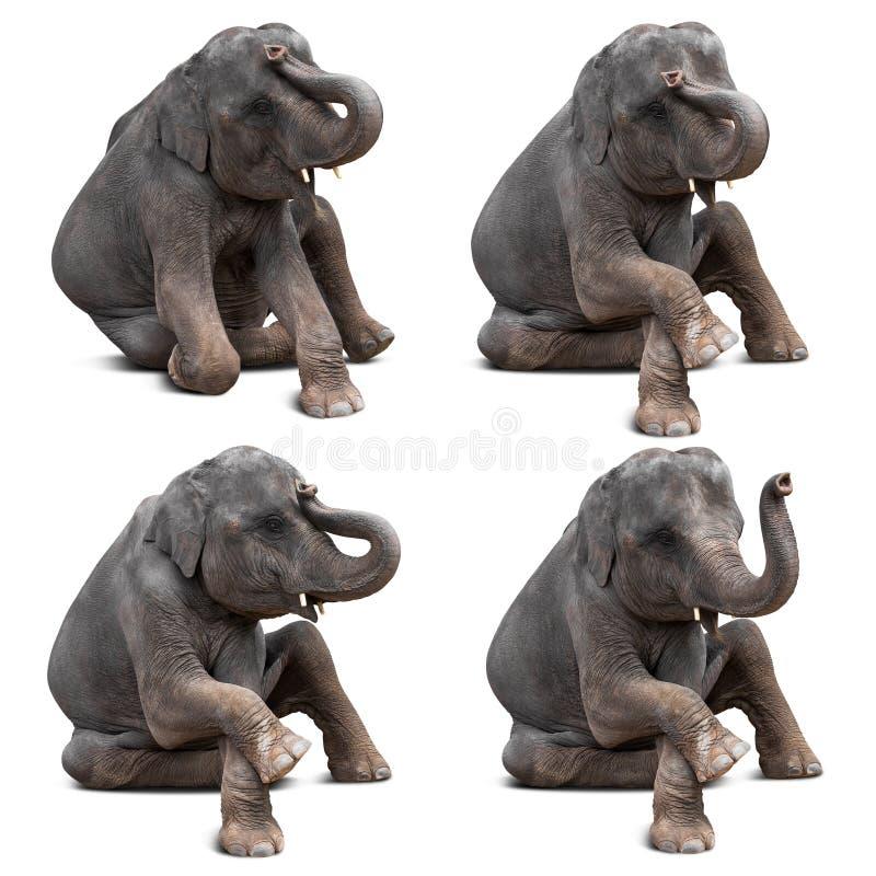 Изолированный слон младенца стоковые фотографии rf
