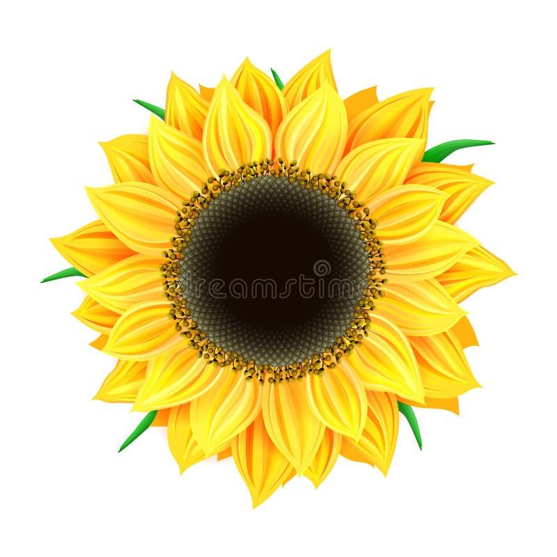 изолированный солнцецвет иллюстрация штока