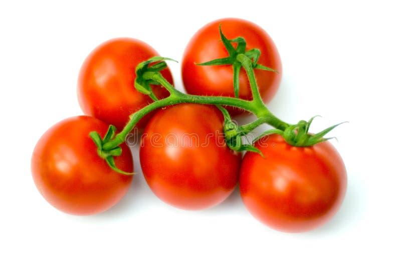 изолированный томат стоковая фотография rf