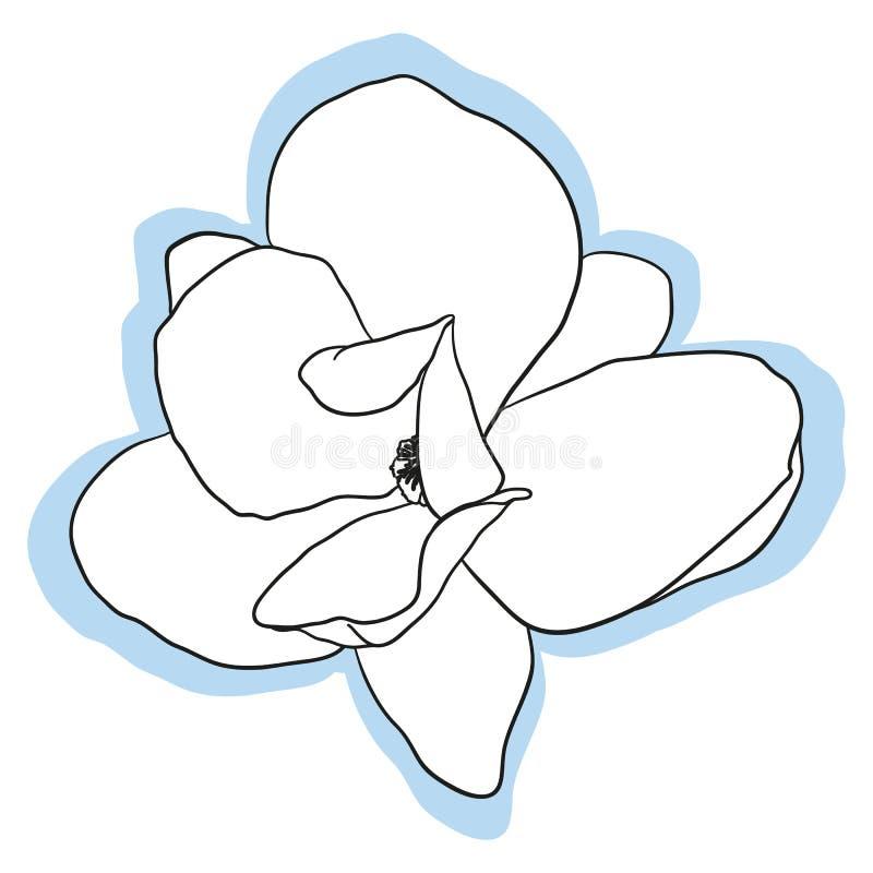 Изолированный цветок магнолии иллюстрация штока