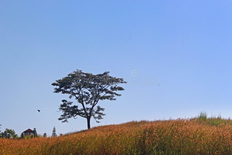 Изолируйте дерево стойки одно на холмах с коттеджем и желтыми стеклянными полями в голубом небе без облаков стоковые фото