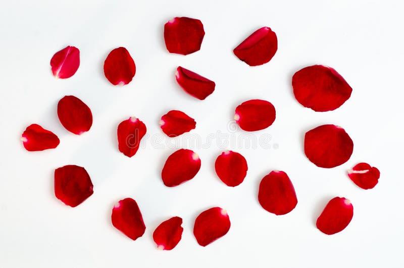 Изолят лепестка розы на сердце дизайна белой предпосылки красном стоковые изображения