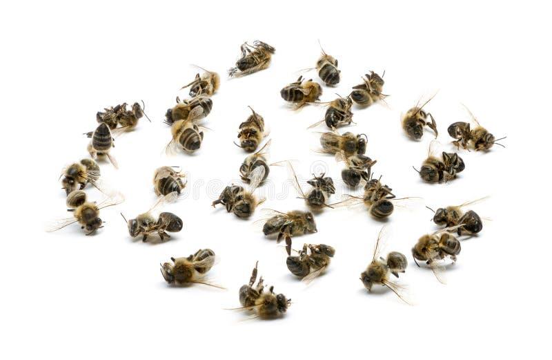 Изолированная группа в составе мертвые пчелы, стоковые изображения