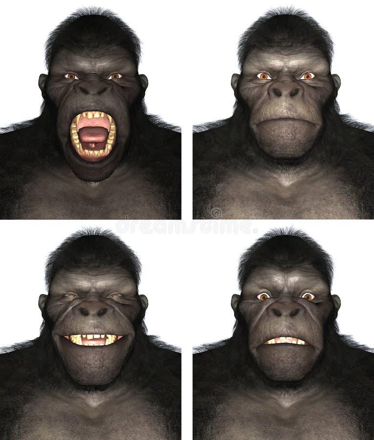 Изолированная иллюстрация эмоции выражения стороны обезьяны гориллы иллюстрация вектора
