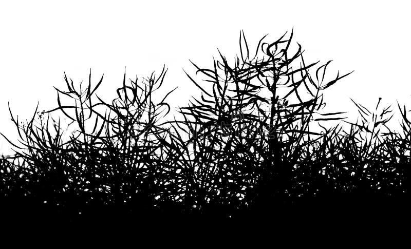 Изолированная предпосылка силуэта сурепки - предпосылка трав стоковое фото rf