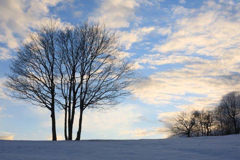 Изолированное дерево над голубым небом amden зона около зимы Швейцарии катания на лыжах панорамы стоковые фотографии rf