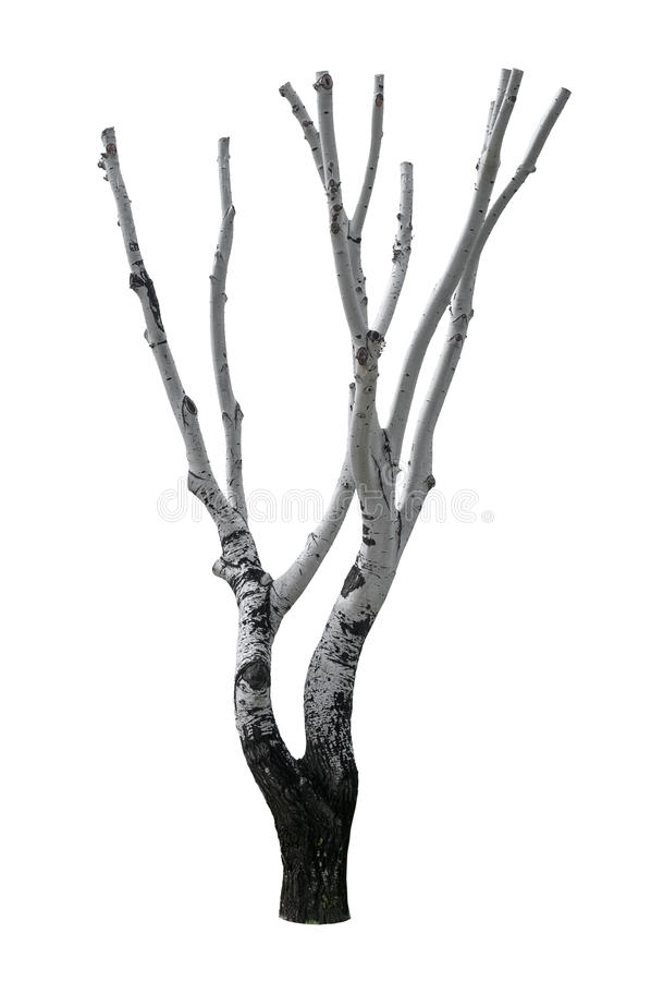 Изолированное дерево отрезка стоковая фотография