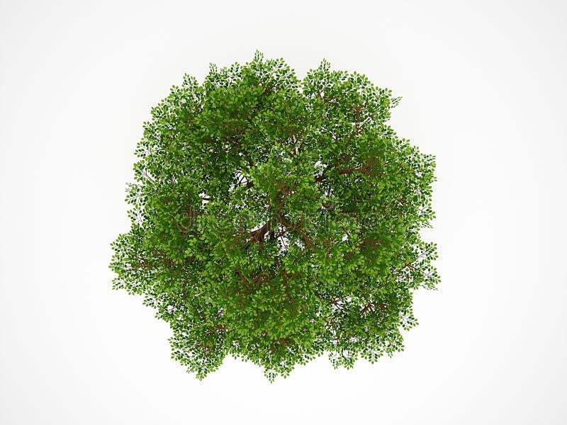 Изолированное дерево сверху иллюстрация вектора