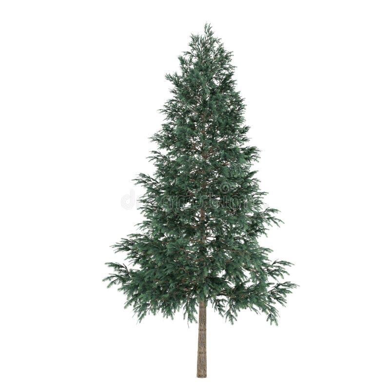Изолированное дерево. Picea abies ель бесплатная иллюстрация
