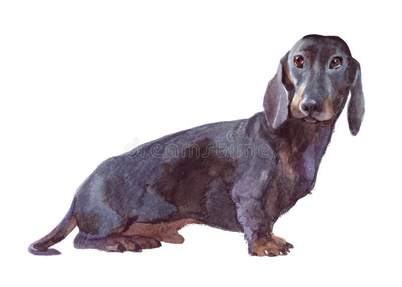 Изолированное животное собаки акварели одиночное бесплатная иллюстрация