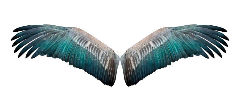 Изолированное крыло стоковое фото rf