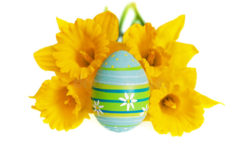 Изолированное пасхальное яйцо покрашенное в голубом и зеленой против желтых Daffodils стоковые фотографии rf