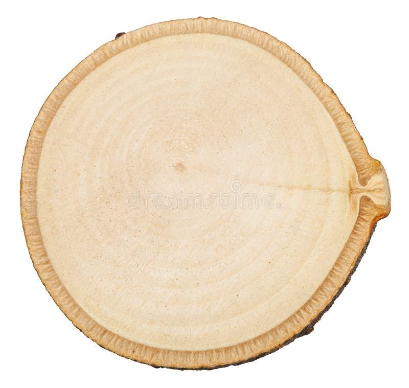 Изолированное поперечное сечение ствола дерева березы стоковое фото rf