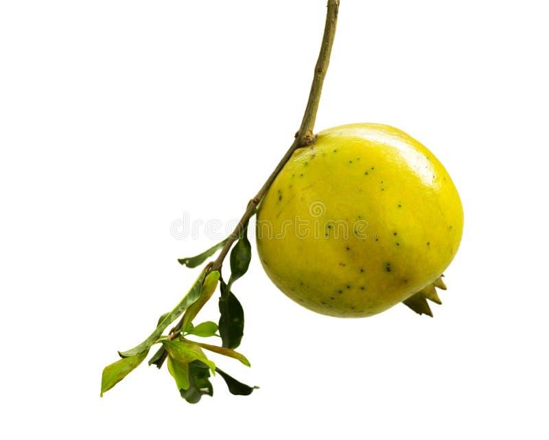 Изолированное тайское желтое гранатовое дерево стоковое изображение