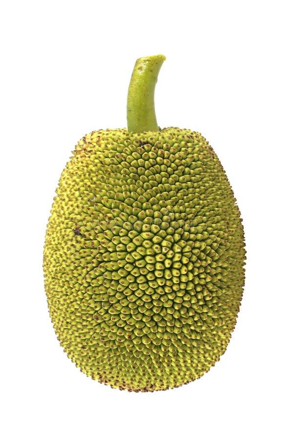 изолированные детеныши jackfruit стоковые фотографии rf