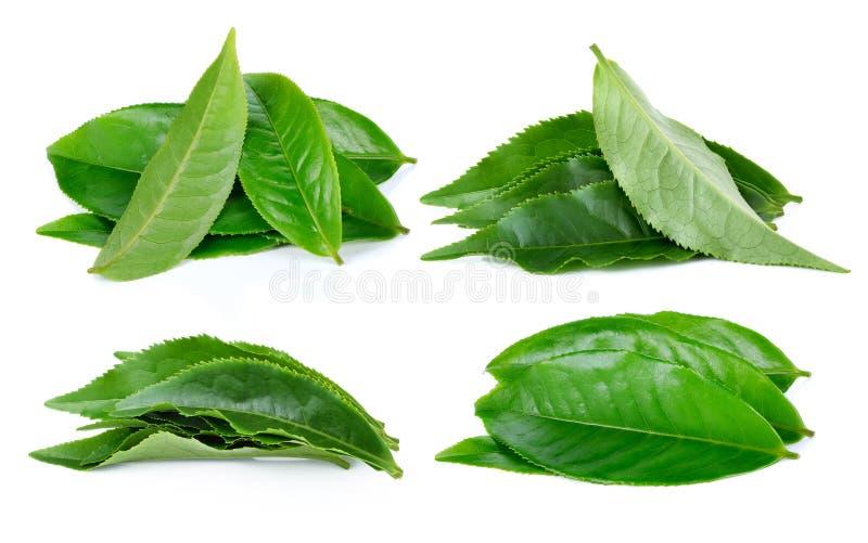Изолированные лист чая стоковая фотография