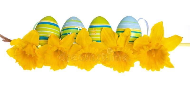 Изолированные пасхальные яйца за строкой желтых цветков Daffodil стоковое изображение rf