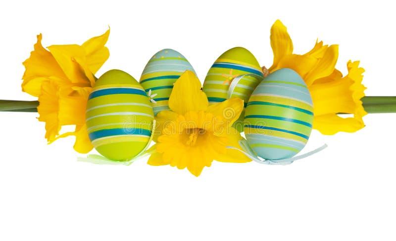Изолированные пасхальные яйца и желтый Daffodil цветут в ряд стоковые изображения