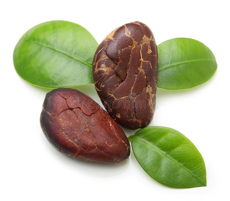 Изолированные фасоли какао стоковые фото