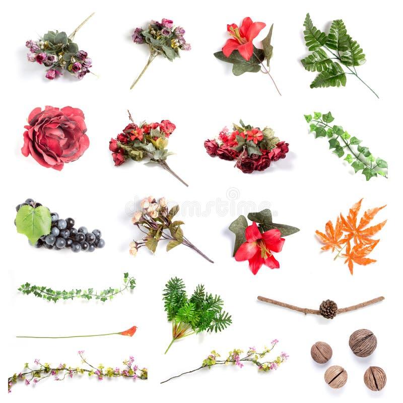 Изолированные цветки стоковые изображения rf
