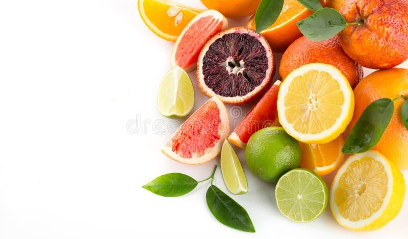 Изолированные цитрусовые фрукты собрания стоковые фото