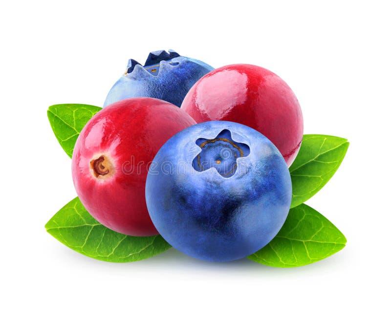 изолированные ягоды стоковые фото