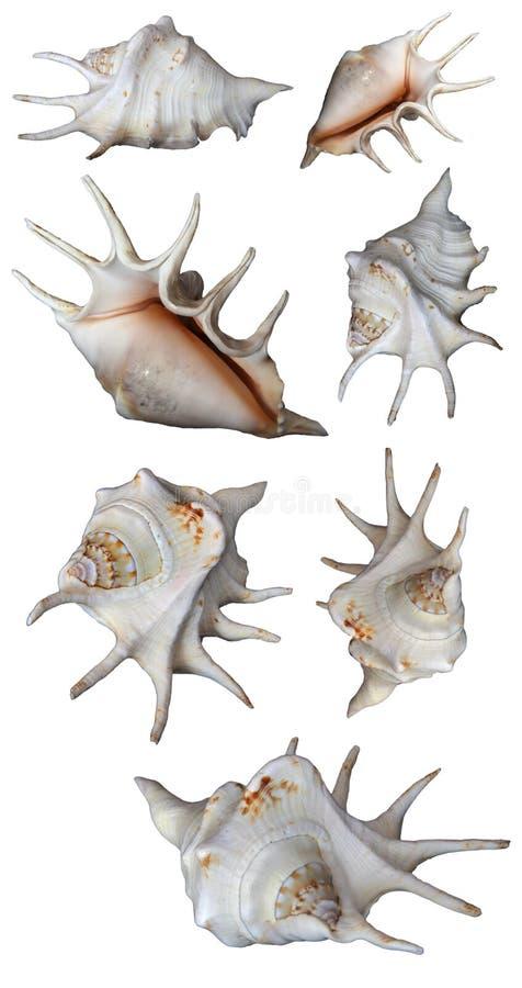 Изолированные seashells собрания стоковые изображения rf