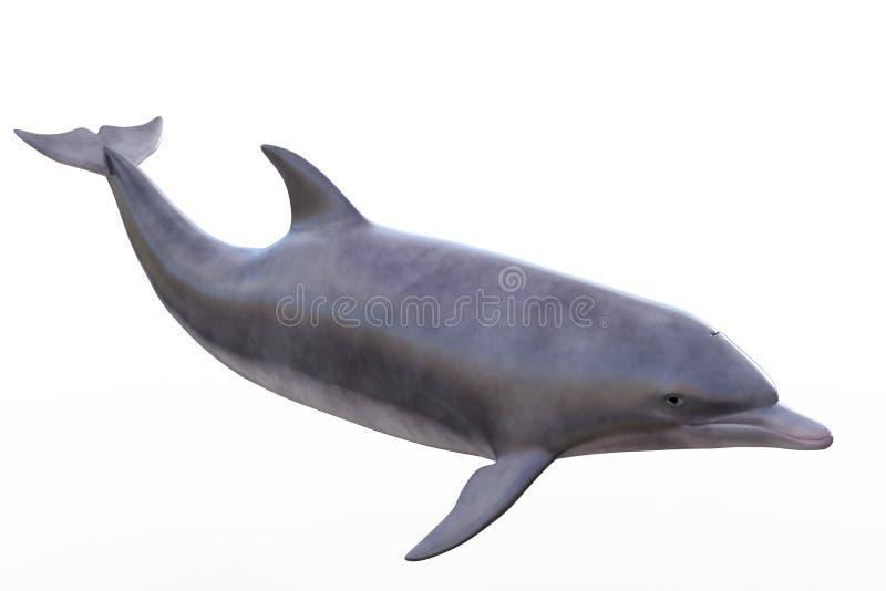 изолированный дельфин стоковая фотография