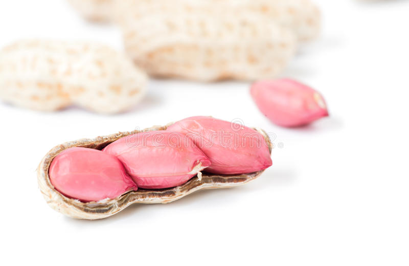 Изолированный макрос арахиса семени стоковые изображения