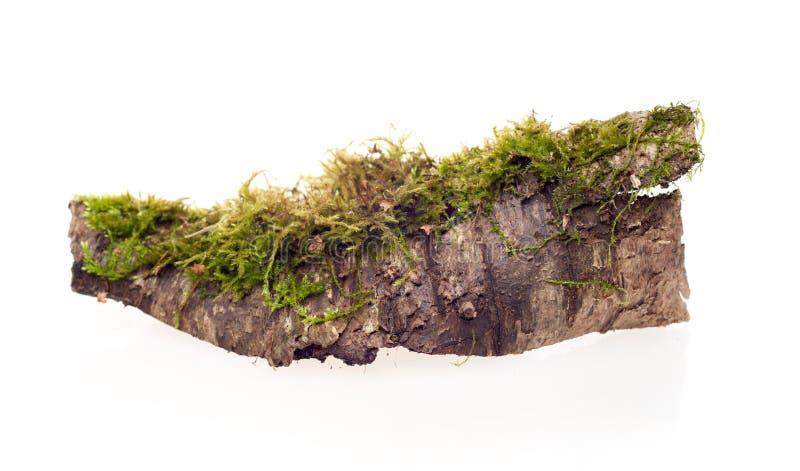 Изолированный мох леса стоковые изображения rf