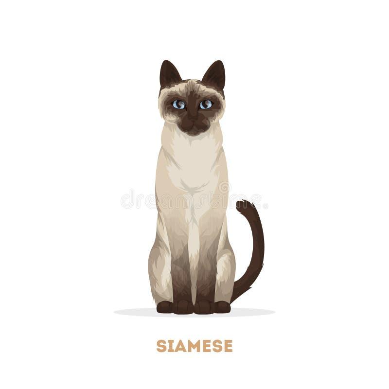 Изолированный сиамский кот иллюстрация вектора