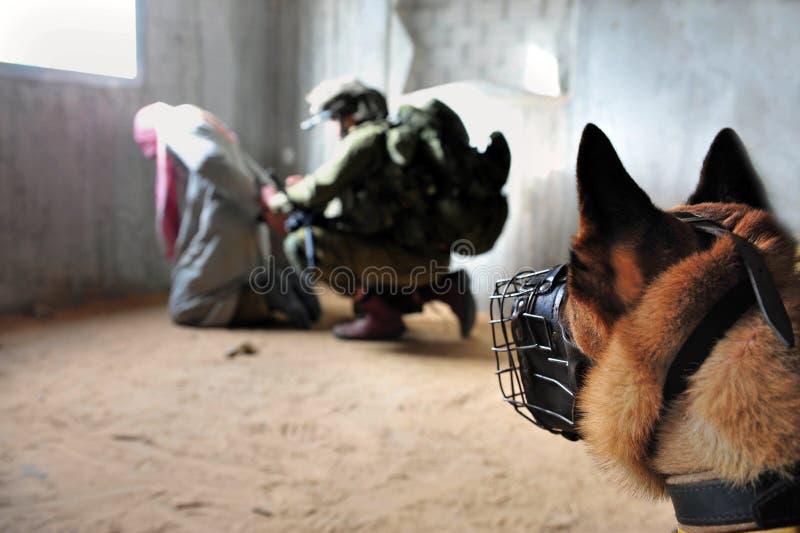 Израильские воины арестовывая террориста стоковые изображения